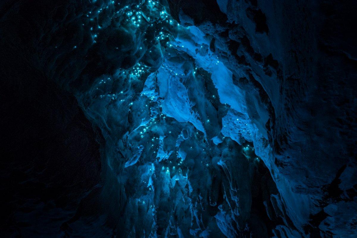 Por que a Nova Zelândia tem cavernas com tetos luminosos e brilhantes? 10