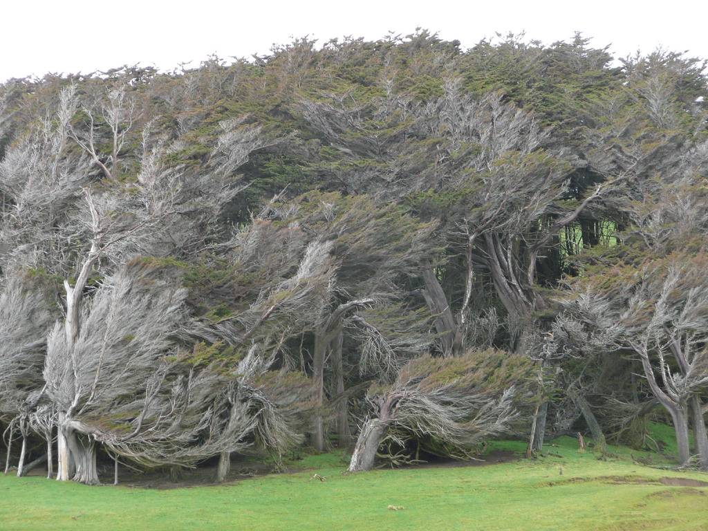 As árvores do vento na Nova Zelândia 06