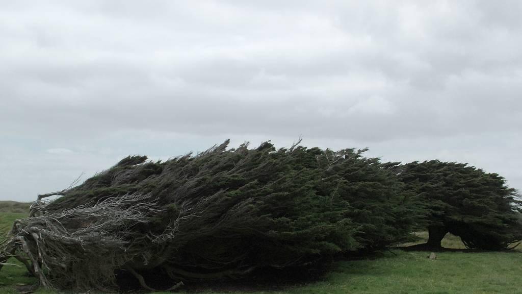 As árvores do vento na Nova Zelândia 09