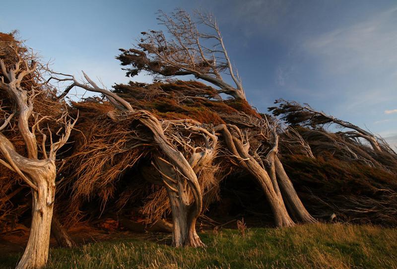 As árvores do vento na Nova Zelândia 16