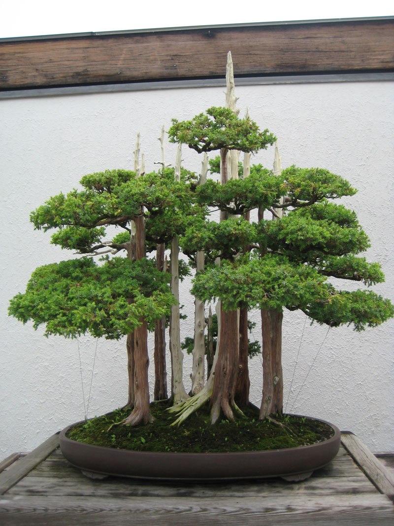 20 bosques de bonsais que vão parecer autênticas obras de arte em miniatura 01