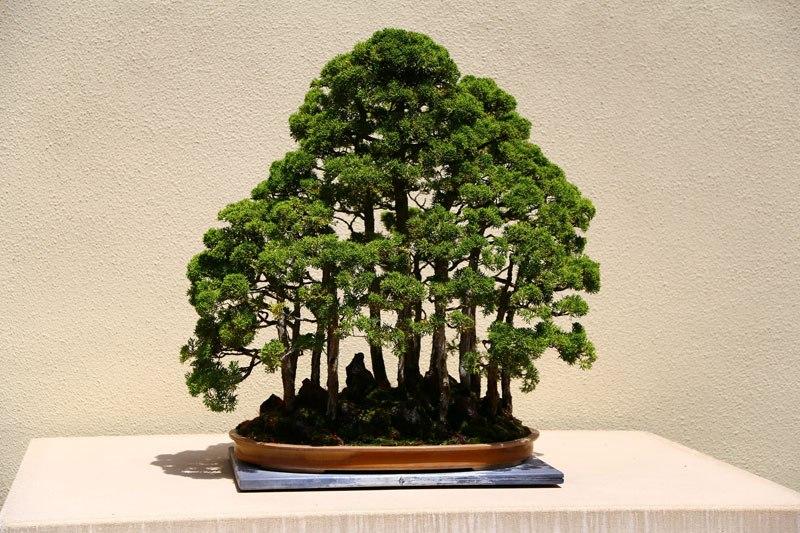 20 bosques de bonsais que vão parecer autênticas obras de arte em miniatura 02