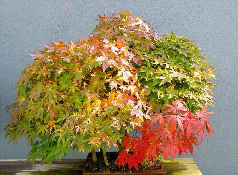 20 bosques de bonsais que vão parecer autênticas obras de arte em miniatura 03
