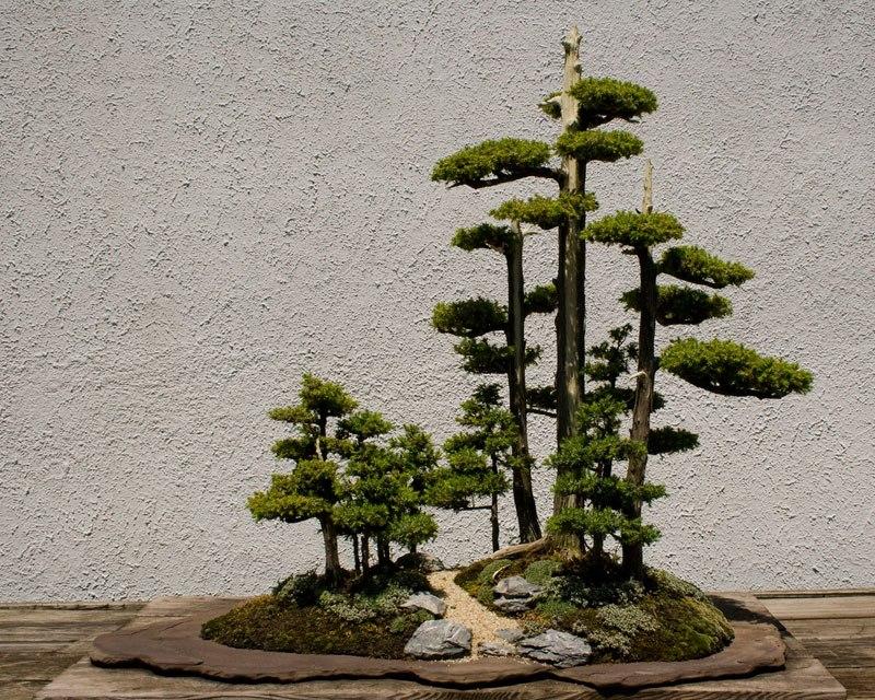 20 bosques de bonsais que vão parecer autênticas obras de arte em miniatura 04