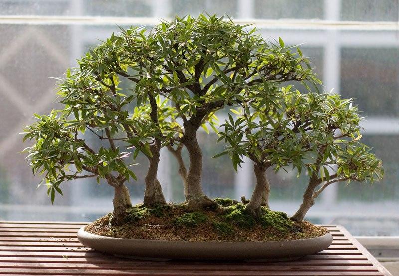 20 bosques de bonsais que vão parecer autênticas obras de arte em miniatura 05