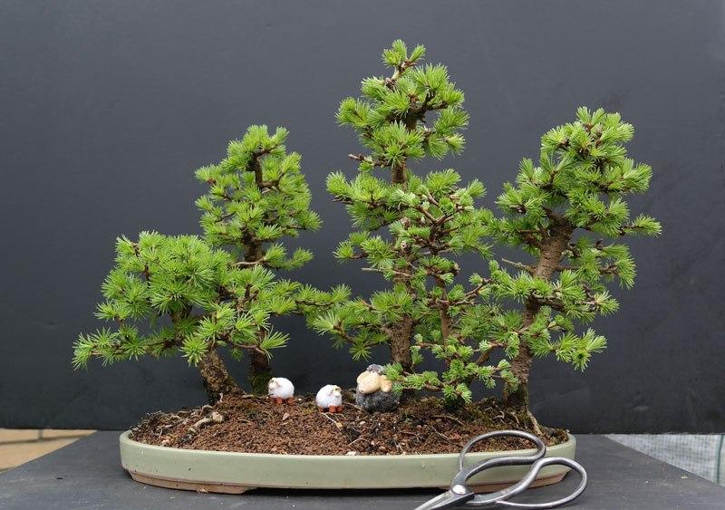 20 bosques de bonsais que vão parecer autênticas obras de arte em miniatura 08