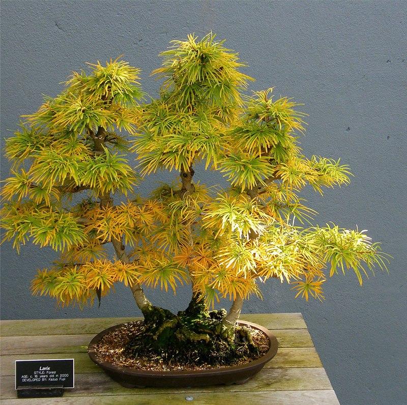 20 bosques de bonsais que vão parecer autênticas obras de arte em miniatura 09