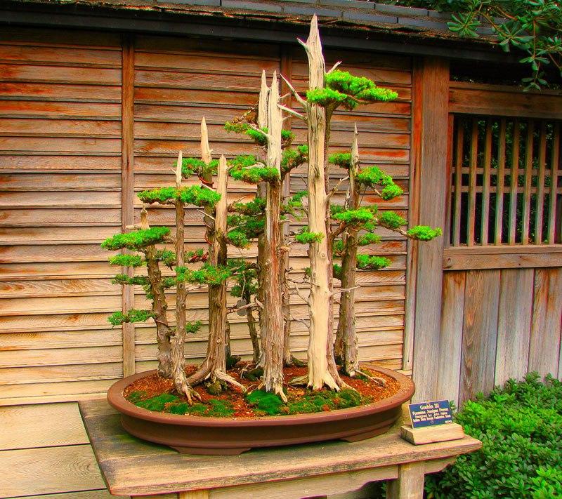 20 bosques de bonsais que vão parecer autênticas obras de arte em miniatura 10