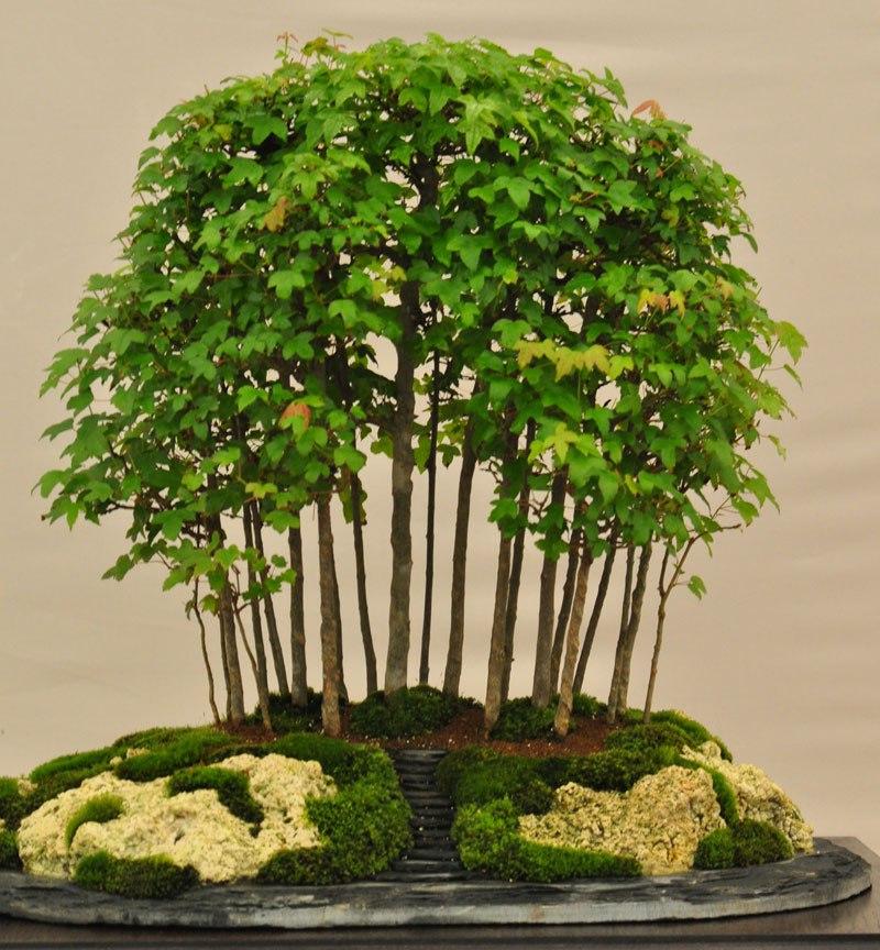 20 bosques de bonsais que vão parecer autênticas obras de arte em miniatura 11