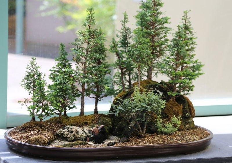 20 bosques de bonsais que vão parecer autênticas obras de arte em miniatura 12
