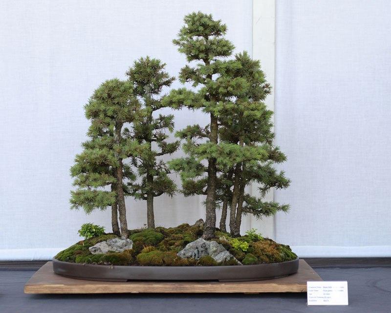 20 bosques de bonsais que vão parecer autênticas obras de arte em miniatura 15