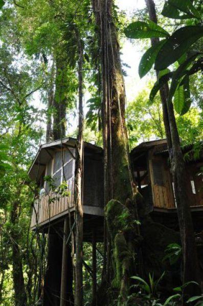 Incrível comunidade de casas nas árvores  07