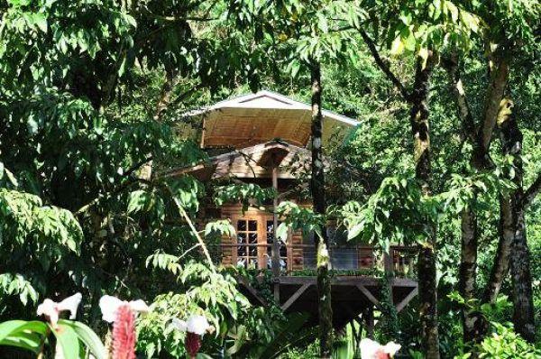 Incrível comunidade de casas nas árvores  37