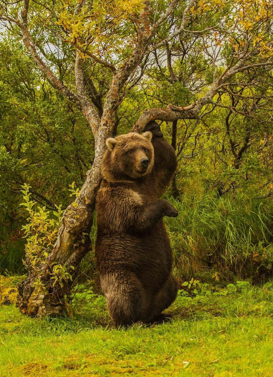 Nature Conservancy: as 20 melhores fotos da Natureza de 2013 05