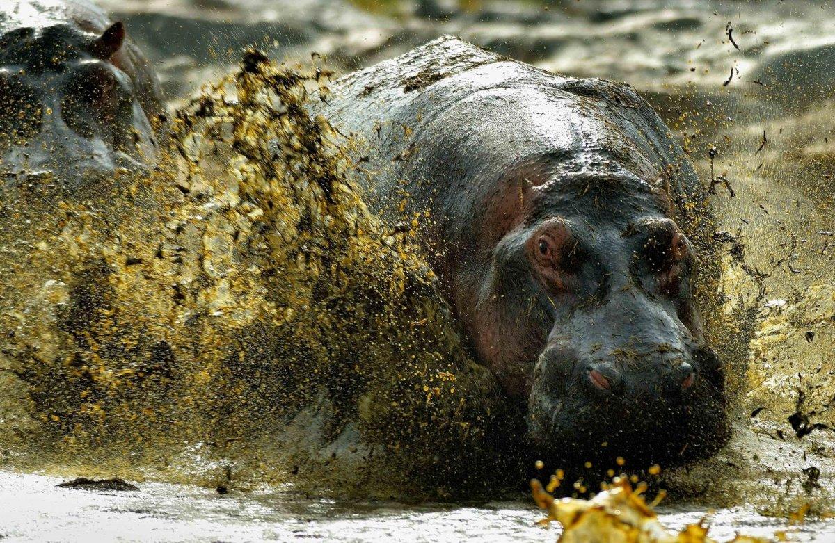 Nature Conservancy: as 20 melhores fotos da Natureza de 2013 07