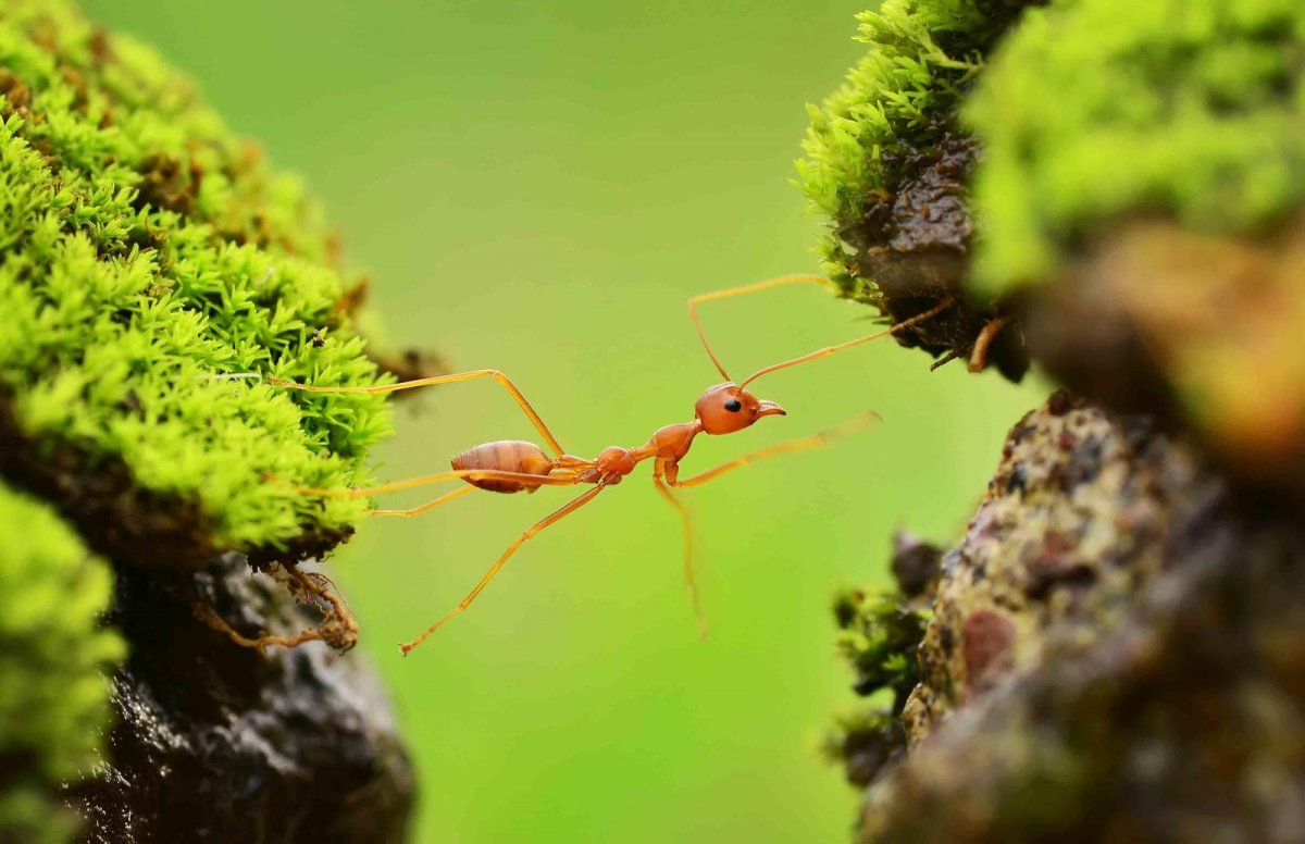 Nature Conservancy: as 20 melhores fotos da Natureza de 2013 08