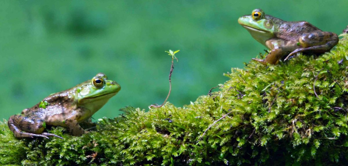 Nature Conservancy: as 20 melhores fotos da Natureza de 2013 10