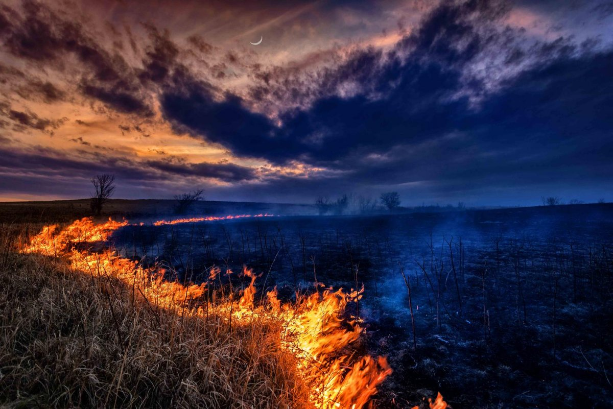 Nature Conservancy: as 20 melhores fotos da Natureza de 2013 11