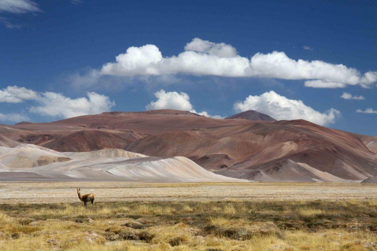 Nature Conservancy: as 20 melhores fotos da Natureza de 2013 14