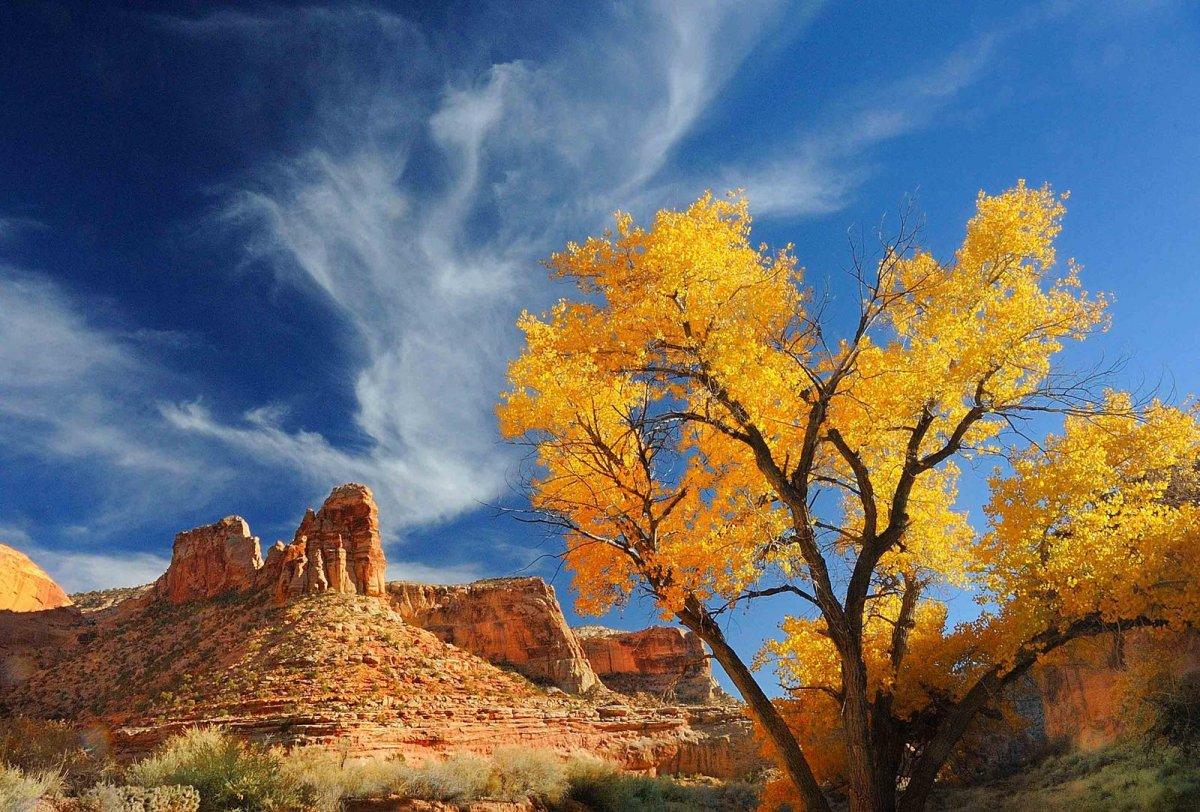 Nature Conservancy: as 20 melhores fotos da Natureza de 2013 17