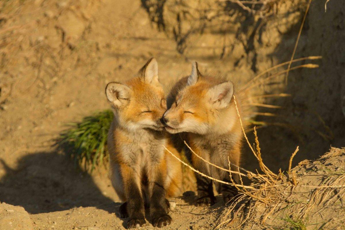 Nature Conservancy: as 20 melhores fotos da Natureza de 2013 19