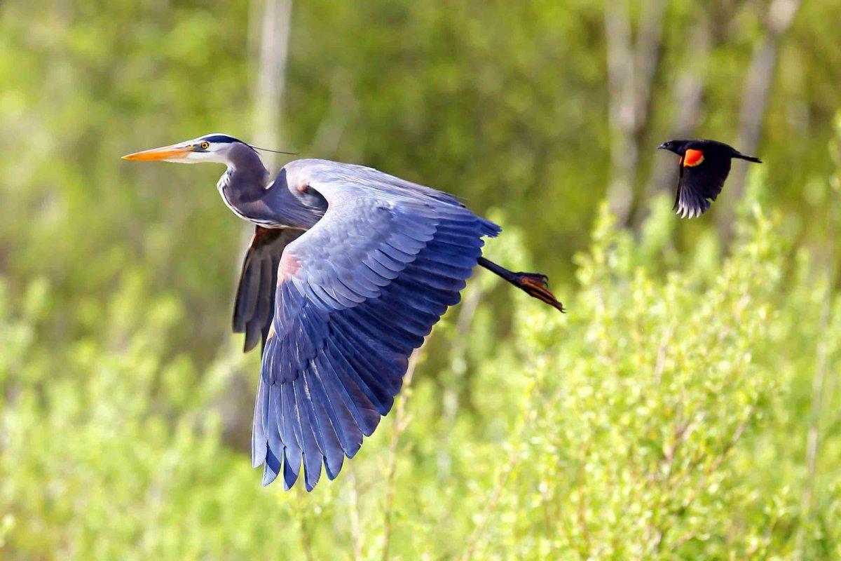 Nature Conservancy: as 20 melhores fotos da Natureza de 2013 20