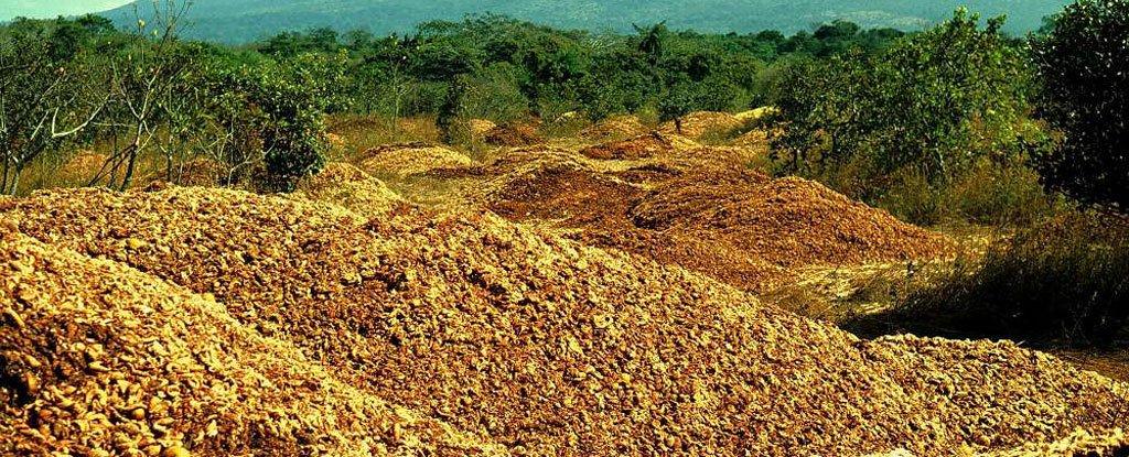 Como 12.000 toneladas de casca de laranja transformaram uma paisagem devastada em um exuberante bosque