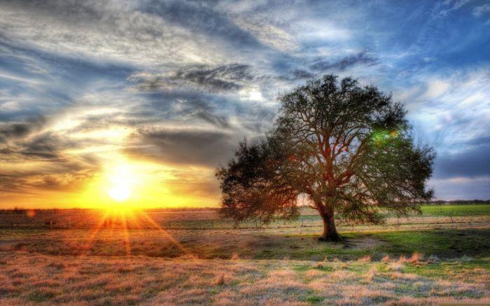 Belas paisagens dedicadas a mulher em seu dia 31