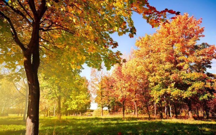 Belas paisagens dedicadas a mulher em seu dia 35