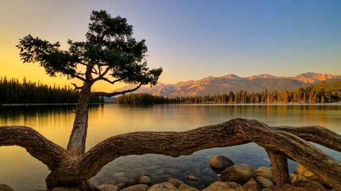 Belas paisagens dedicadas a mulher em seu dia 49