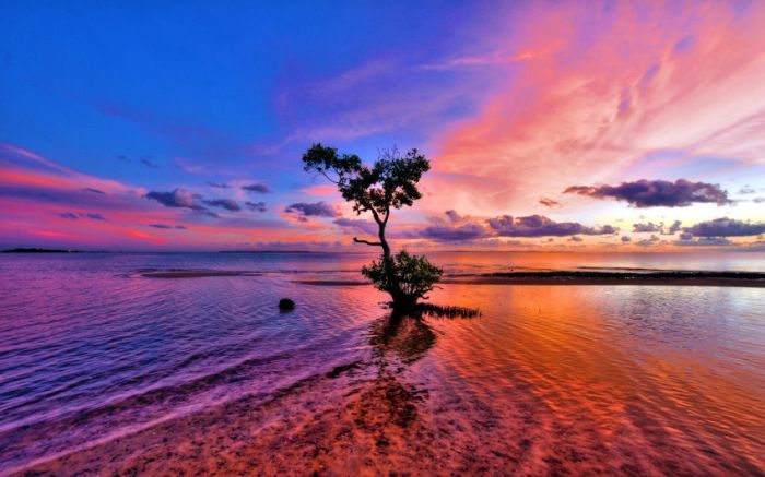 Belas paisagens dedicadas a mulher em seu dia 50