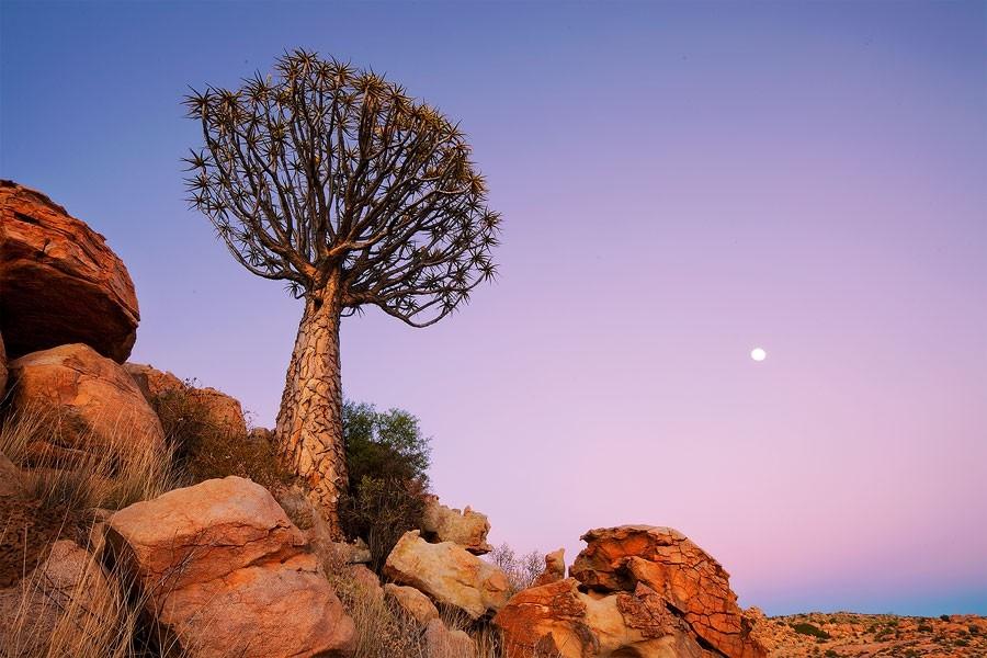 Maravilhas da Natureza - Paisagens da Namíbia 13