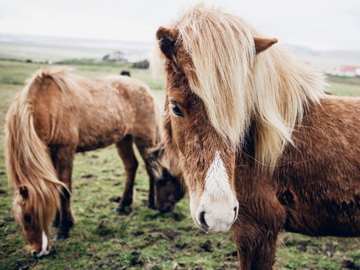 32 fotos que vão fazer você querer viajar para a Islândia 18
