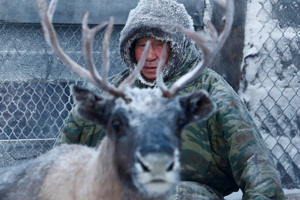 Como é trabalhar na pecuária de renas no ártico, Rússia 06