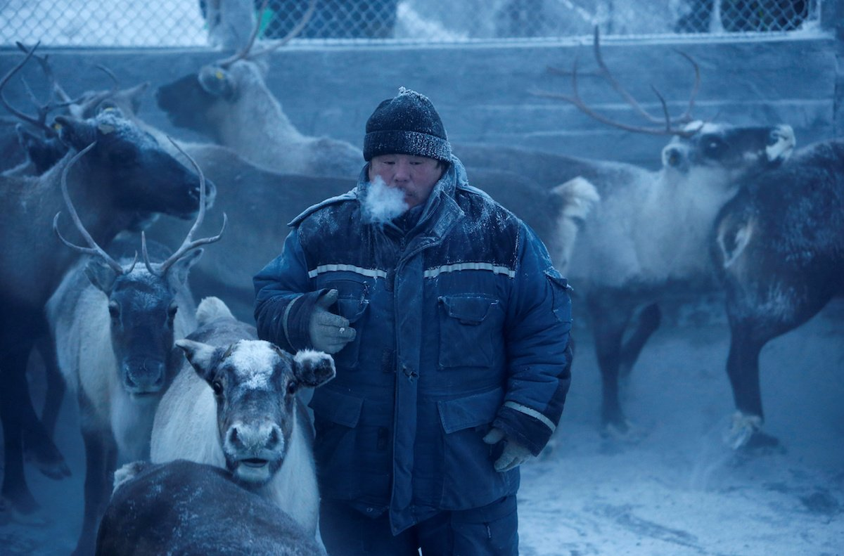 Como é trabalhar na pecuária de renas no ártico, Rússia 13