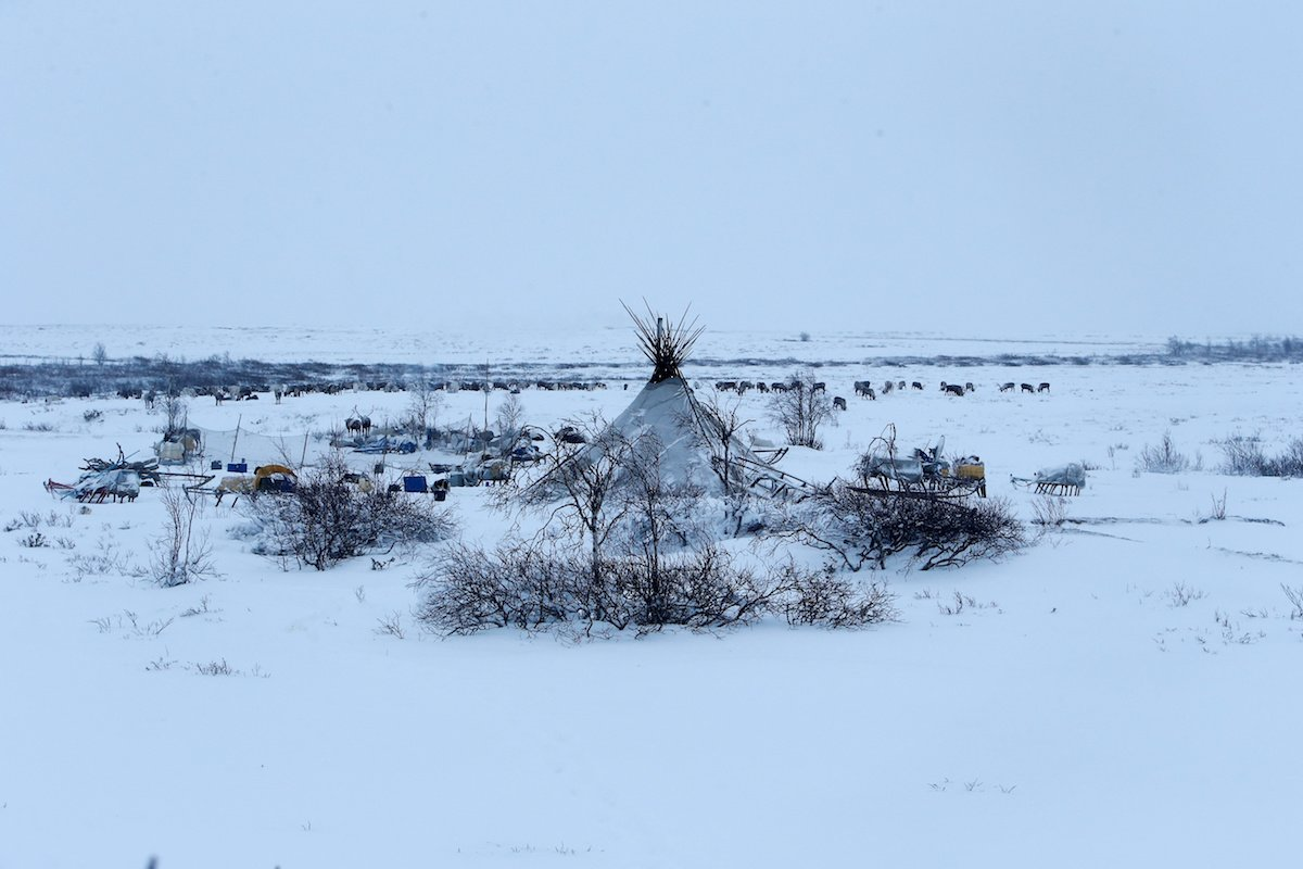 Como é trabalhar na pecuária de renas no ártico, Rússia 14