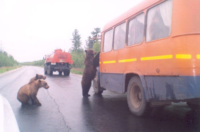 Somente na Rússia 16