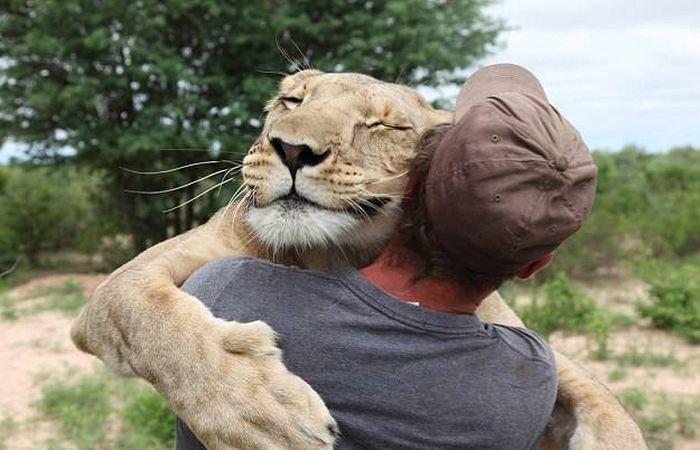 Abraço de leão.