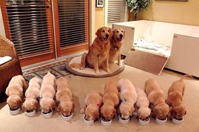 Pais orgulhosos e seus preciosos filhotes.