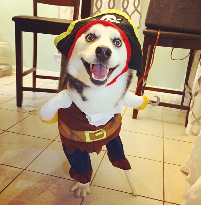 Dingo, um cão com três patas e sua original fantasia de Halloween.