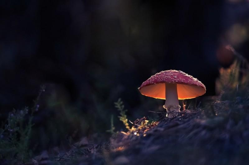 Um pequena cogumelo.