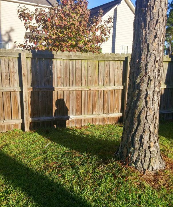 Denunciado pela sombra.
