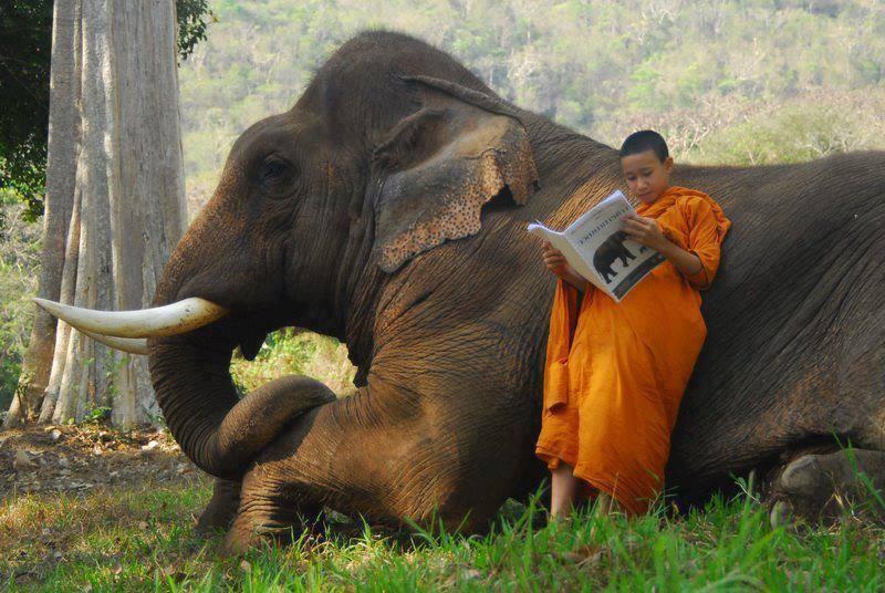 Quando você ganha um elefante e lê as instruções de uso.