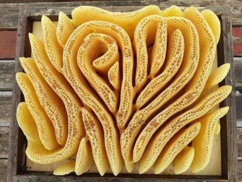 Um favo de mel.