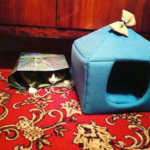 Erro de principiante. O gato sempre escolhe a bolsa ou a caixa.