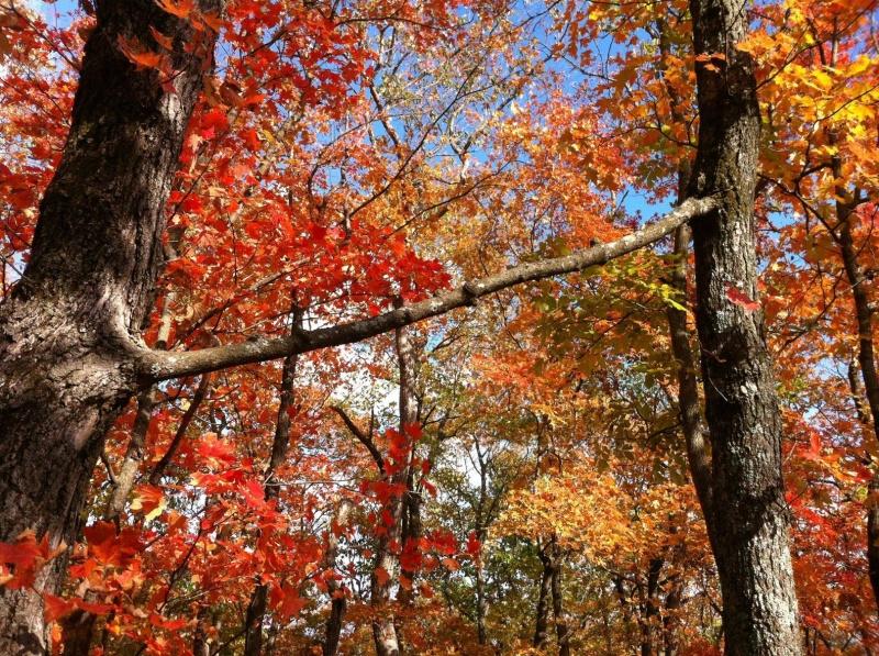 Duas árvores com um ramo em comum.