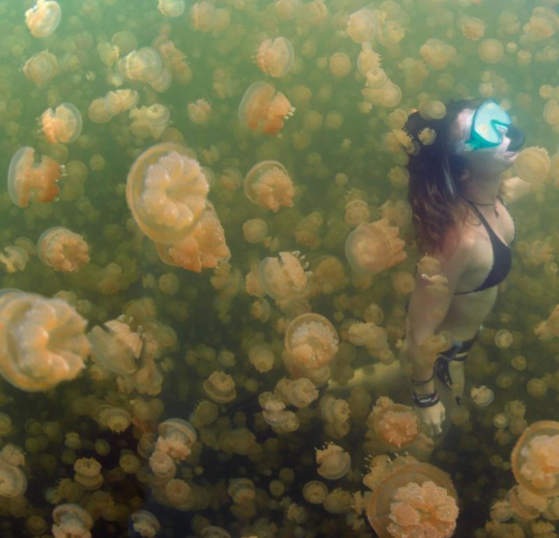 Um mergulhador cercado por milhares de águas-vivas em Palau.