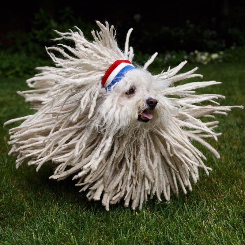 Cão ou escovão?