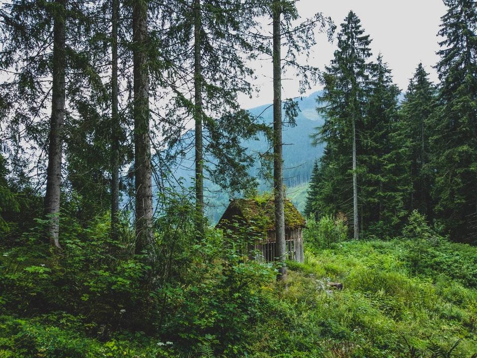 Vou morar sozinho em Styria, Áustria.