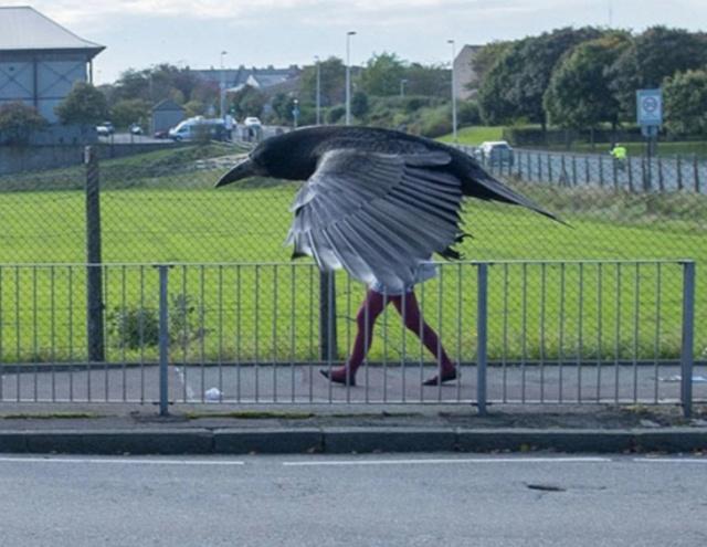 Homem-pássaro.